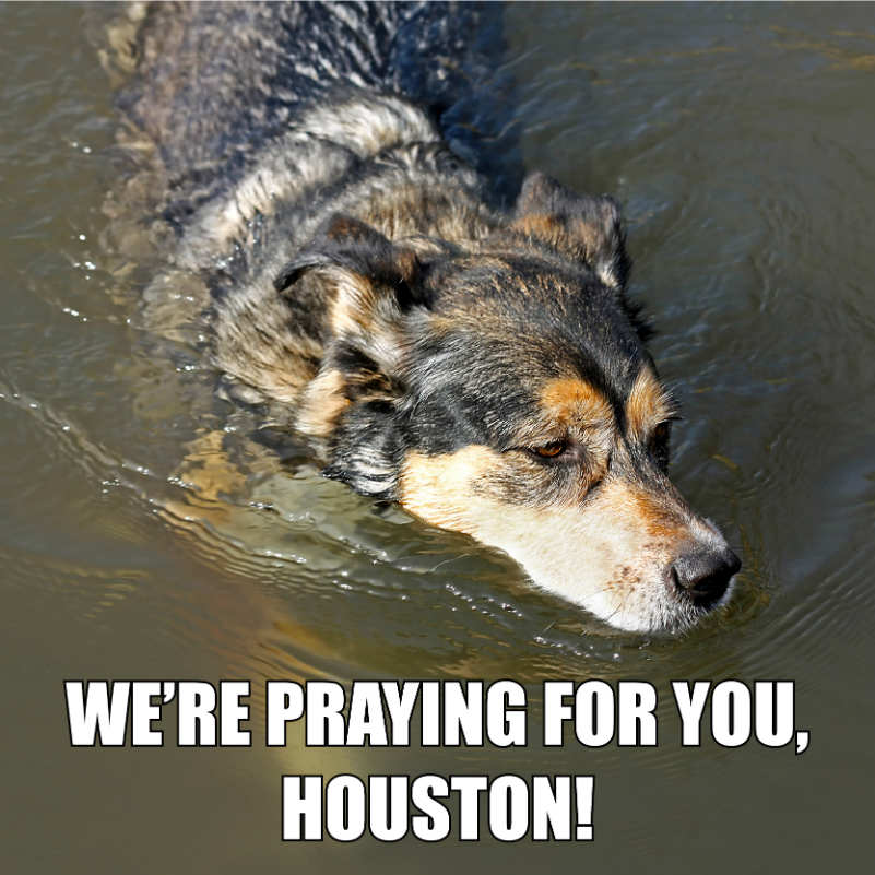 Hurricane Harvey Meme
