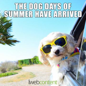Dog Days of Summer 2020 meme