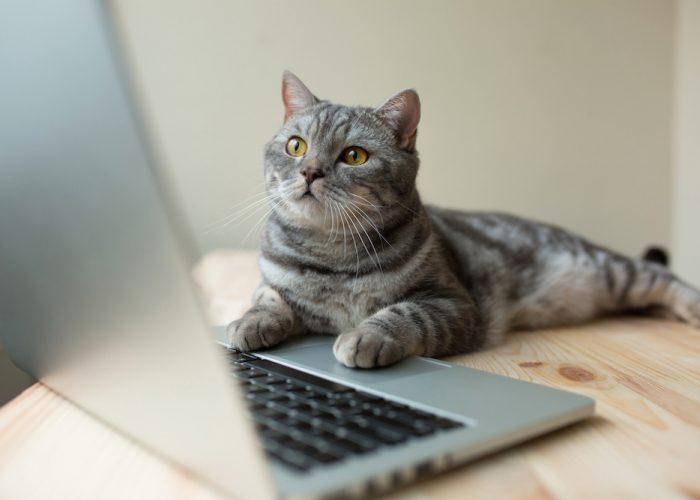 Is Your Vet Website Content Purr-fect?